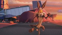 Getting Looney About Road Runner and Coyote