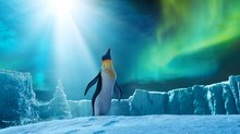 'Happy Feet Two': More Thrills and Krills
