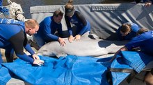SeaWorld Makes a Splash with 'Sea Rescue'