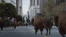 MPC Lets the Buffalo Roam for Esurance