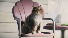 A Tough-Talking CG Bronx Cat Shows His Tender Side in Cat's Pride Spot