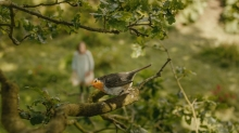 Framestore Breathes Life into StudioCanal's 'The Secret Garden'